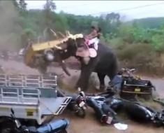 slon-razbijanje1111-696x456