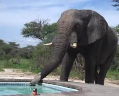 slon-bazen